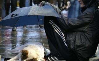 rainy day dog under umbrella